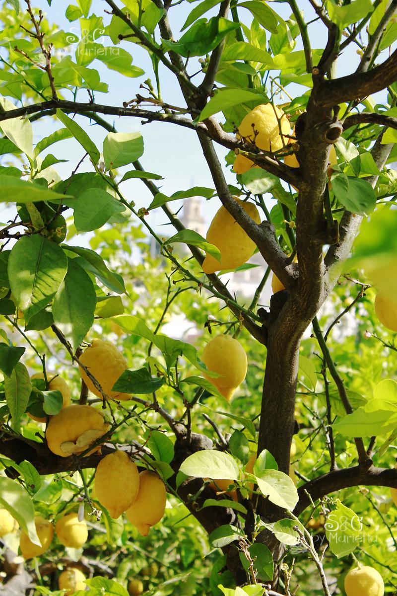 Arbol limones